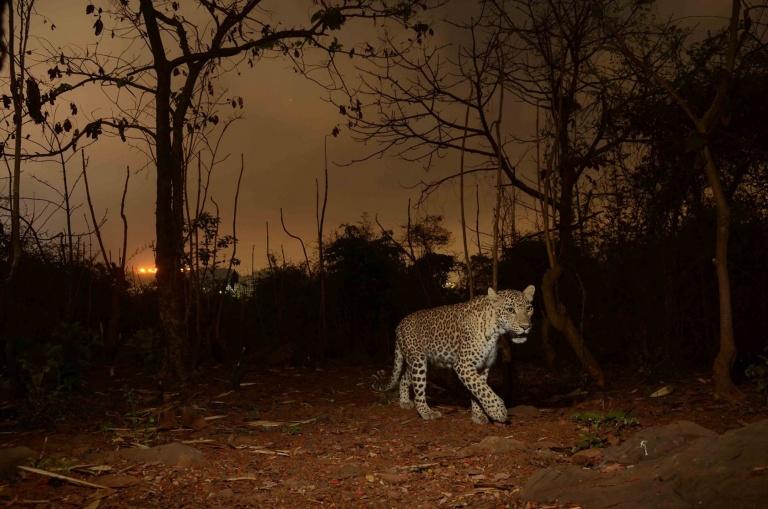 आरे च्या जंगलात प्राणिसंग्रहालय उभारण्यास आम्हा मुंबईकारांचा विरोधात